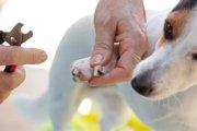 犬も巻き爪になる?その症状から治療・予防方法まで