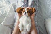 犬が心を許した時に見せる5つのサイン