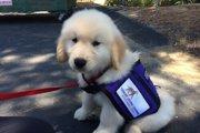 犬と一緒に成長していく囚人更生プログラム「POOCH」
