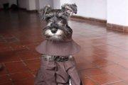【仰天!】ボリビアで修道士になった犬゙口ひげ修道士゙カーメロ君