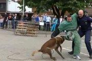 頼もしい犬のおまわりさん!海外で活躍する警察犬達!