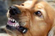 愛犬が嫌われる?!ご近所さんに迷惑をかけるかもしれない4つの特徴
