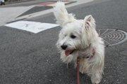 散歩中に迷子犬に出会ったら?保護から飼い主さんの元へ戻した2例