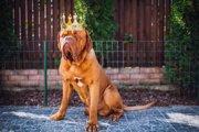 犬が自信をもっている時に見せる3つの仕草