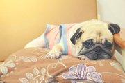 愛犬が急な下痢に襲われてしまったとき、どう対応したら良いの?