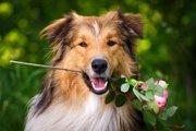 飼い主と愛犬のお散歩に関わる「ラッシー効果」とは?