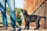 犬の散歩での歩くペースはどれくらい?子犬・成犬・シニア犬でみる速度