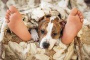 犬が飼い主の足元で寝るときの心理状態