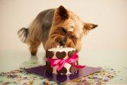 犬用のケーキやスイーツをあげる時に注意しないといけない2つのこと