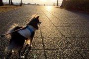 獣医師が監修した犬靴専門ECサイト『docdog』がオープン!
