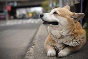 犬と泊まれるホテル、宿!愛犬と一緒に旅行・お出かけする準備と注意点