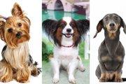 トリマーがおすすめする、お手入れしやすい犬種はどんなわんちゃん?
