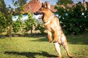 すぐ興奮しちゃうわんこは要注意!犬の過活動について
