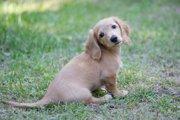 年齢別にみる犬の最適な過ごし方【幼少期~シニア期まで】