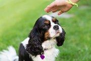 犬を撫でないほうがいい6つのタイミング