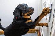 「飼い主に危機が!」911後意識を無くした飼い主を救った犬