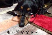 愛犬が癌に侵され余命宣告。看取り治療で過ごした最期