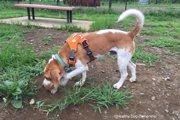 犬の食糞の原因と対策を科学的に考える