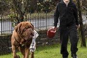 【凄い!】飼い主の少年の失明の危機を知らせ救った犬