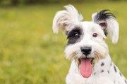 犬の骨を強くする食べ物15選