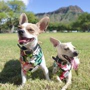 Gizmo&Mailo画像