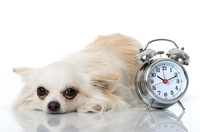 犬にも体内時計があ…