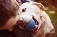 犬の譲渡会情報につ…