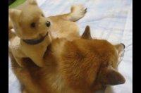 極楽だワン♪犬のオモ…