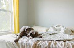 犬が特定の部屋に居…