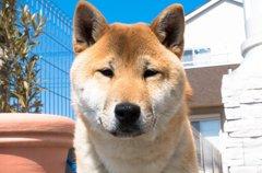 【体験談】私が愛犬…