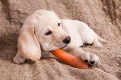 犬は腐ったものを食…