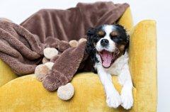 犬は寝るとき、明る…