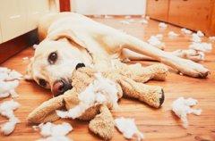 犬のおもちゃの選び…