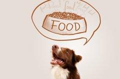 犬の食器スタンドラ…