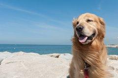 犬と行く沖縄旅行!…