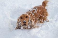 愛犬と雪遊びすると…