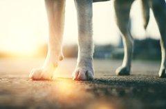犬の足に現れる老化…