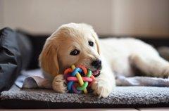犬が他の犬が遊んで…