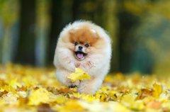 犬と秋に散歩すると…