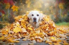 油断は禁物!秋と冬…
