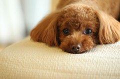 「ケフィア」は愛犬…