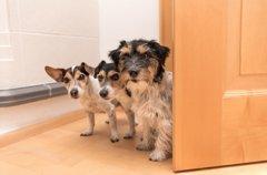 犬が飼い主のトイレ…