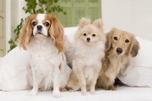 犬の種類・大図鑑