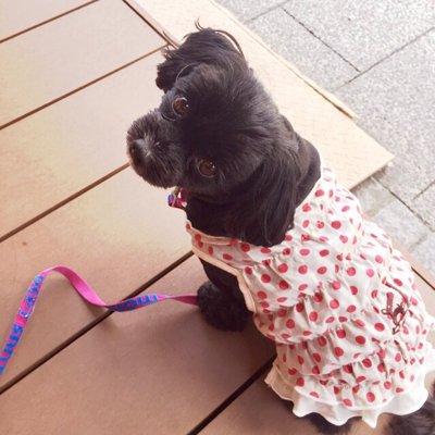 Kimilyの犬服