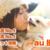 ペット保険【安心度No.1】はau損保!通院ありタイプの登場で自由度◎