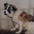 動物実験で生還した犬『シロ』から学ぶ・・・私たちが考えるべき事(まとめ)