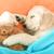 【あなたの愛犬はどれ?】飼い主への本音が表れる愛犬の寝る位置3パターン