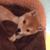 柴犬のかわいい動画30連発!