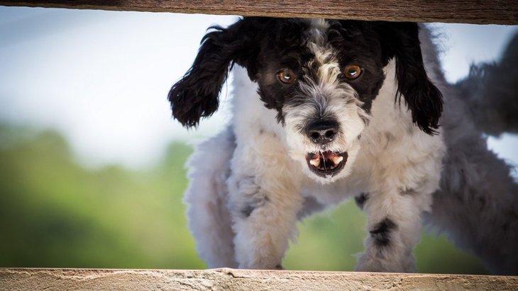 犬が本気で噛んでくる前に見せる仕草や行動4選