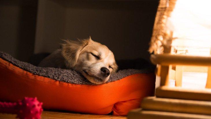 犬にNGな『ベッド』の特徴3選!快適に過ごしてもらうための環境とは?